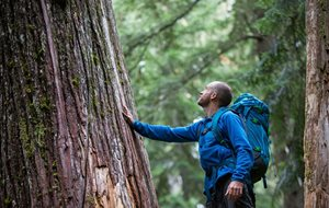 man with hiking pack reaching to touch large tree in forest